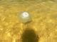 Гигантские медузы атаковали побережье Азовского моря