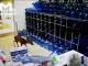 Раненого оленя заметили в ростовском магазине