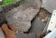 После дождя в Ростове провалился мост